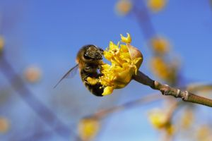flower macro bee summer