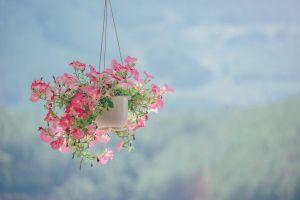 flowers blur flora bloom color hanging petals plant blossom growth