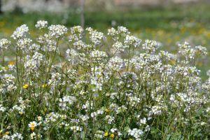 flowers spring flowers beautiful flowers