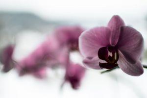 focus blur flower color