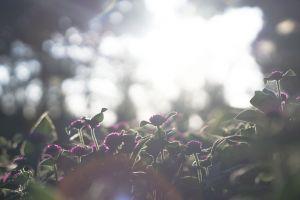 focus environment growth close-up flora nature light blur garden field