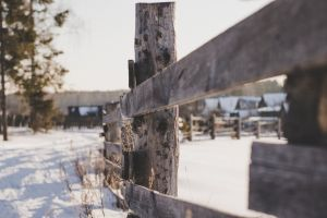 focus weather wooden fence colors fence white close-up landscape background trees
