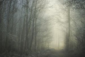 foggy #outdoorchallenge misty frost path trees forest outdoor outdoorchallenge winter