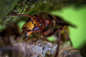 food bee nest queen close-up macro photography macro animal little insect