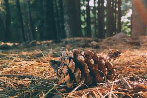 forest lump wood cone forest cover