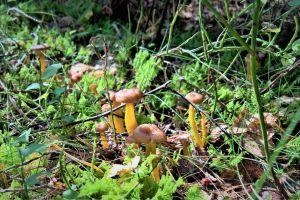 forest mushroom mushrooms mushroom forest