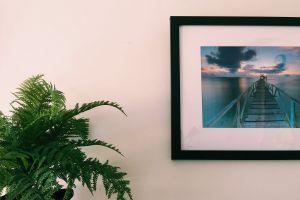 frame beach indoor wood indoor plants cloudy skies