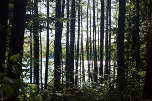 free forest tree irati bosque selva saray jungle forest cover bidasoa atletiko taldea