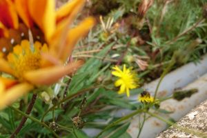 garden grass daylight insect plants bees flowers