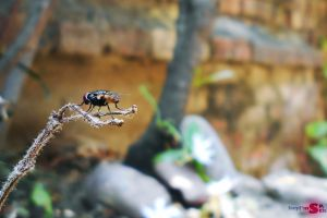 garden insect background blur natural animals macro low light nature macro photography house fly