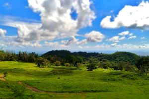 grass landscape green scenic outdoor nature