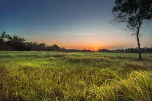 grass sky sun tree nature dawn field farmland sunset sunrise