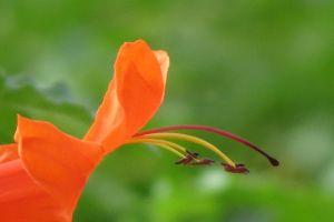 green flower closeup orange nature orange flower on green background