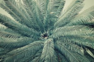green growth palm pattern environment summer plant light outdoor flora