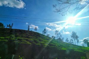 green sun clouds nature plantation tea bright