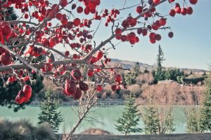 growth water berries food bright trees branches nature landscape red fruits