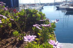 harbour flor port sea boat