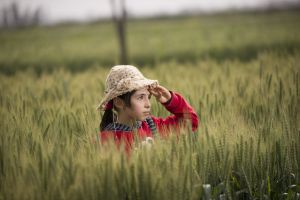 hat field farmland grass crops wheat field child farm girl