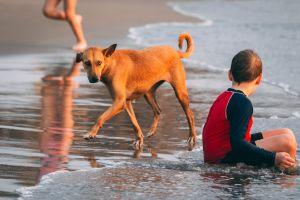 kid summer water people wet boy seashore leisure relaxation portrait