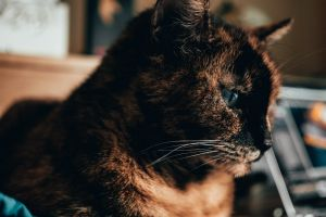 kitten cat fur looking animal little animal photography feline adorable portrait