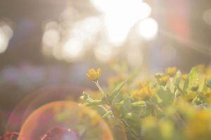 light flowers field sun park color focus beautiful growth nature