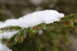love cold blur winter wonderland green winter snow flakes world close close up