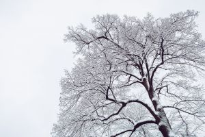 low angle shot cold white park branches weather fog wood trunk frost