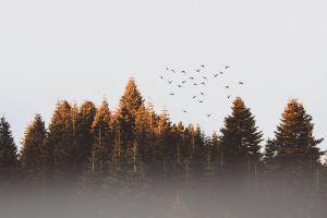 mac wallpaper nature wallpaper hd wallpaper desktop backgrounds sunset cold season flying woods evergreen