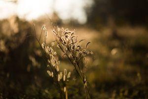 macro field growth grass plant