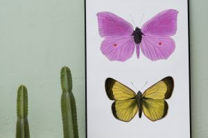 macro photography invertebrate colors wings whiteboard art insects growth cactuses home decor