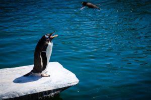 mammals animal daytime wildlife zoo penguin water