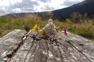 meadow mountain flowers