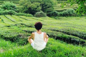 meditation meditating nature tea green