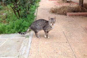 meow cats cyprus cat stripe animal photography animal
