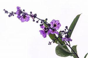 minimalism purple flower plants after the rain minimalist
