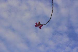minimalist flower blue sky minimalism standing out