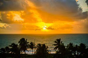 morning sun palm tree golden sun sand sunrise sand beach palm ocean seashore sea