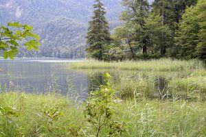 mountain lake mountain forest trees