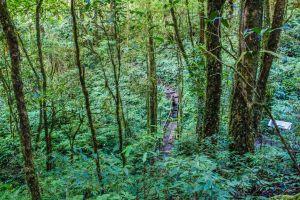natural trail green beautiful tropical mountain trunk forest trekking rainforest