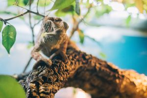 naturaleza animales terrario iguana animal