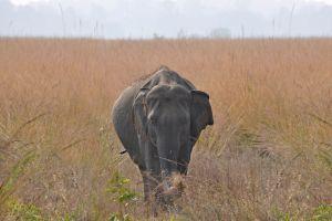 nature forest wildlife baby elephants elephant