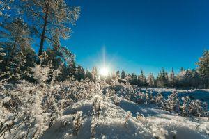 nature landscape forest sun woods cold winter landscape winter snow freezing