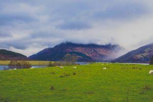 nature pasture field daylight animals hill farmland grass scenery scenic
