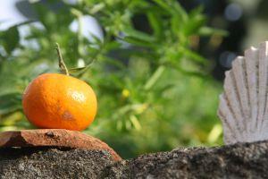 nature photography fruit seashell natural food fresh fruit