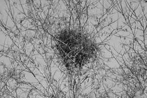 nid pies nature printemps oiseaux arbres