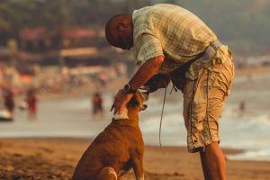 ocean beach dog man