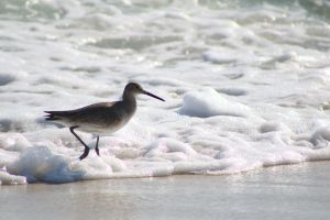 ocean surf sea bird