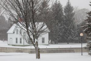 ottawa tree snow winter