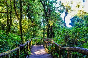 outdoor mountain tropical natural rain adventure trees sunlight background light