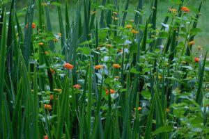 outdoor wet grass flower